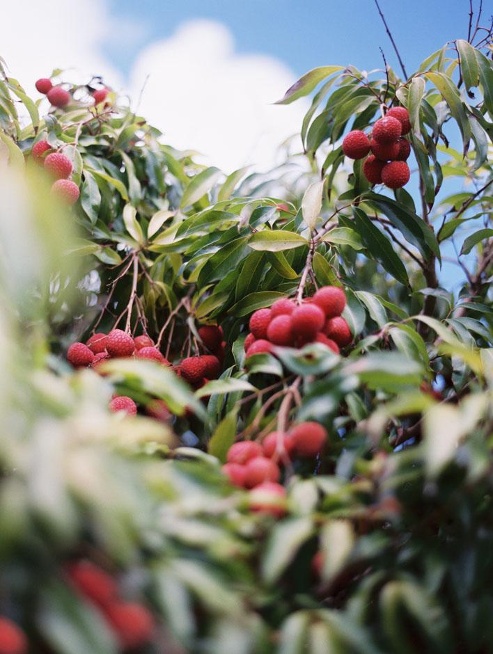 islandreflectionsphotography_kauaiphotographer0069